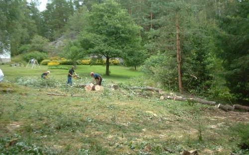 Tømmerhogst / Logging